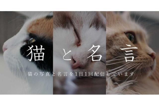 画像1: 株式会社アンノウンが、猫の写真と前向きになれるヒントが詰まった名言を毎日配信するサービス『猫と名言』を6/1~スタートさせた。 ねこ×名言を毎日配信するサービス! 6/1~スタートした『猫と名言』は、猫の写真と、歴史上の人物・偉人・経営者・スポーツ選手・各界の著名人などの名言を組み合わせて毎日配信するサービス。 カワイイねこの姿に癒されるだけでなく、前向きになれるヒントが詰まった名言との組み合わせは、忙しいビジネスマン・ビジネスウーマンに特にオススメだ。 今回、『猫と名言』を配信するアンノウンの大瀬浩二さんにお話を伺ってみた。 開発者・大瀬さんにインタビュー! ――『猫と名言』を始められようとしたキッカケを教えてください。 仕事な [...] irorio.jp