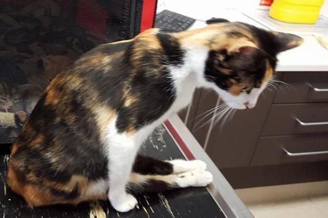 画像1: オーストラリアで発覚した野良猫をめぐる心ない虐待、そしてその後に起きた奇跡が耳目を集めている。 The Dodoが伝えるところによると、先月、動物保護団体Sawyers Gully Animal Rescueに1本で電話がかかってきた。 野良猫への虐待を告げる電話 電話は野良猫の親子の面倒を見ているという女性からのもので、「近所の男性が母猫を殺してしまった」との通報だったという。 男性は庭に忍び込んだ母猫のしっぽをつかみ、トレーラーめがけて投げつけたそうで、電話を受けた同団体は、直ちに生後1週間になる子猫たちを保護した。 一方母猫は死亡したものと思われ、その場所に置かれたままだったが、翌朝信じられない光景が目撃された。 麻痺した体引 [...] irorio.jp