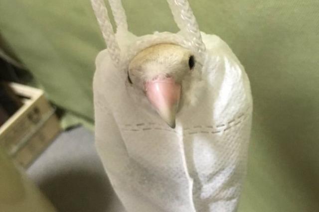 画像1: 漫画家のまったくモー助(@mmousuke)さんがツイッターに投稿した、コザクラインコの「こまちゃん」の様子の画像が可愛らしいと話題になっています。 インコが充電器の入ってた巾着袋をなんかやたら気に入ってる pic.twitter.com/6DRgPH5lJn — まったくモー助 (@mmousuke) 2016年6月17日 何を思ったのか、充電器を入れる小さな袋に入り込んで、まるでくつろいでいるかのよう。ずっと噛んだり入ったりして遊んでいるそうです。 この画像を見た人たちは「癒される~!」と賑わっています。 すっぽり収まってる。可愛い_:( ́ཀ`」 ∠):_ うちのインコ様も袋が大好きです。 顔をぴょこって出してるの最高 癒しが充 [...] irorio.jp