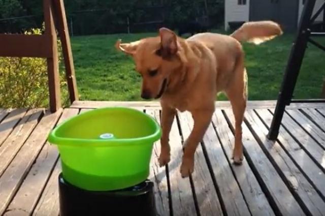 画像1: ボール遊びが大好きなワンコのために、自動でボールを打ち上げてくれるマシンが人気を呼んでいる。 犬がボールをセットし何度も楽しめる そのマシンとは「GoDogGo Fetch Machine G4」。これは上部の容器の中にボールを入れると、内側へ落ちていき、一定の間隔で自動的にボールを打ち上げてくれるというもの。 そのボールは程よい高さに舞い上がり、ワンコは走って行ってキャッチ。それをくわえて戻り自分で容器の中に入れると、再びボールを発射。こうして人の手を借りずに、ワンコが自分で何度でも繰り返し遊ぶことができるという。 実際に動画に写っているワンコもボールが打ち上がるまで尻尾をふり、ワクワクしながら待機。待ちきれず思わず声を上げる場面 [...] irorio.jp