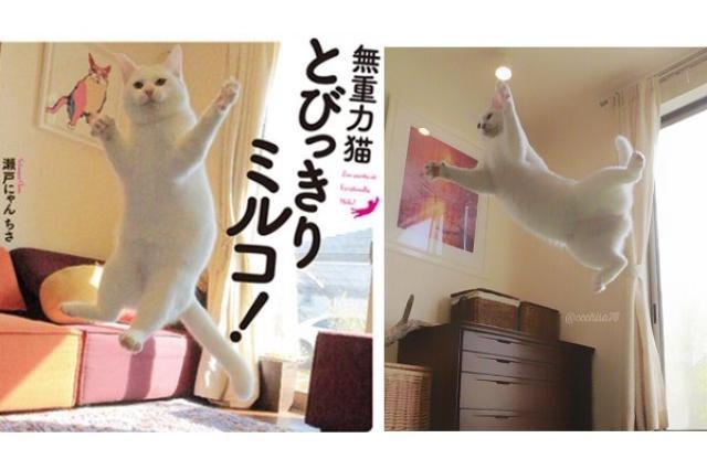 画像1: 「無重力猫」としてTwitterで大人気のミルコくんが、写真集『無重力猫とびっきりミルコ!』を発売することになりました。 駐車場で拾った猫だった... 2015年の8月に駐車場で拾われ、瀬戸にゃん ちさ(@ccchisa76)さんのウチにやってきたミルコくん。 主人が帰宅しない。心配で電話すると「駐車場に仔猫がいる。ほっとけない」と言う。慌てて私も駆けつける。 という訳で・・・家族が増えました! 先住猫とは少し距離感がありますが、意外とみんな平常心。名前はまだない新猫、宜しくお願いします。 pic.twitter.com/bNMQJ5GUlE — 瀬戸にゃん ちさ@無重力 猫ミルコのお家 (@ccchisa76) 2015年8月27日 [...] irorio.jp