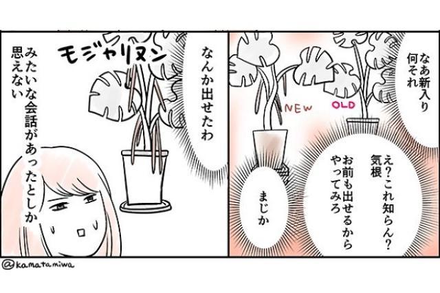 画像1: 「植物が不思議だった話」のマンガに注目が集まっています。 植物同士で会話してた!? このマンガを投稿しているのは、イラストレーターのカマタミワ(@kamatamiwa)さん。 植物が不思議だった話 https://t.co/QZLMyNJLdq pic.twitter.com/OH2gVAfxJd — カマタミワ@書籍発売中 (@kamatamiwa) 2016年7月19日 カマタさんは数年前から、モンステラという観葉植物を育てていました。 ある日、新しいモンステラを一鉢購入してみたんだとか。 新しいモンステラは、「気根」(幹から空気中に向かって伸ばす植物の根)を出すタイプだったそうです。 さっそく、古いモンステラの隣に新しいモンステ [...] irorio.jp