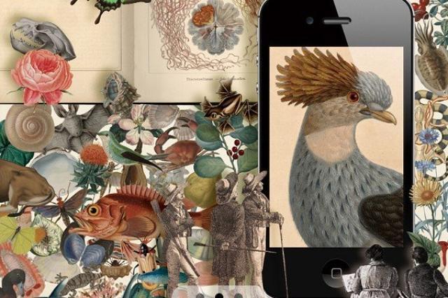 画像: これが無料でいいの?貴重な解剖図、自然誌、航海記が楽しめる『MAU M&L 博物図譜』が面白すぎる