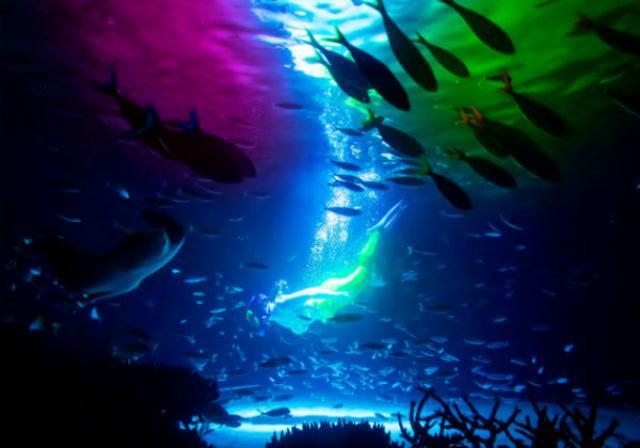 画像1: 2011年8月、「天空のオアシス」をコンセプトに全面リニューアルオープンした東京・サンシャイン水族館が面白そうなイベントを次々に開催している。 全面リニューアルから早くも5周年! 8/4、リニューアルオープンから、早くも5周年を迎えたサンシャイン水族館。 現在は5周年を記念し、人気の水中パフォーマンスの新演目『ラグーン・ファンタジー ~海は光に満ちている~』を9/30までの期間限定で上演中だ。 大水槽・サンシャインラグーンで行われる『ラグーン・ファンタジー ~海は光に満ちている~』は、ダイバーが人魚をイメージしたウェットスーツを着て、光と音が連動する水中の世界を魚たちとともに華麗に泳ぎまわる幻想的なパフォーマンス。 水槽内には新たに [...] irorio.jp