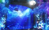"""画像: """"えのすい""""の夜限定イベントがバージョンアップ!幻想的な海の世界は癒し効果抜群♡"""