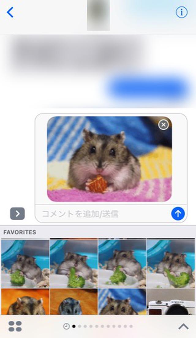 画像: iOS 10のメッセージで使える!アルバムの写真を手間なくGIFにして送れる「Momento」