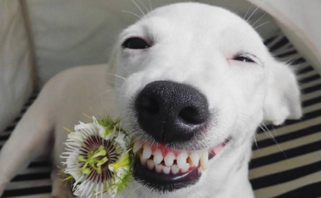 画像: こちらまで笑い声が聞こえてきそう!?スマイル顔のワンコに癒される