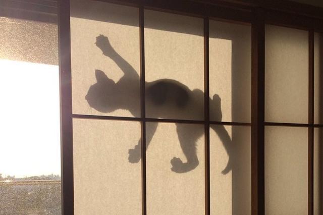 画像1: 網戸に登って西日を浴びたニャンコの影に注目が集まっています。 これはヤモリ...ニャモリだ! この画像を投稿しているのは、とどくろ(@martians777)さん。 西日が凄いので障子を半分くらい閉めてたんだけど、網戸を猫が登っていてその西日に照らされたシルエットったら pic.twitter.com/sWh4x4RDZ8 — とどくろ (@martians777) 2016年9月27日 画像には、網戸に登って西日を浴びるブチ柄の猫三郎くんの姿が...。 猫三郎くんは、元気っぱいのようで網戸に登ってしまったようです。 すると、ちょうど西日が差しはじめ、障子に猫三郎くんの影がくっきりと映ってしまったんだとか。 まるで、「ヤモリ」や「妖怪」の姿 [...] irorio.jp