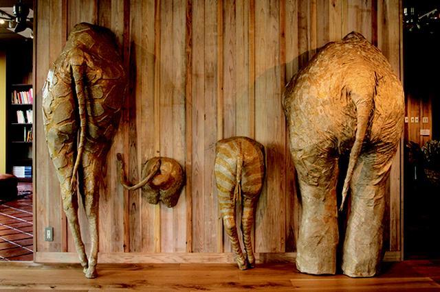 画像1: 圧倒的な存在感を放つ、ダンボールで作成された動物たちのユニークな姿がたまらないと話題を呼んでいる。 今にも動き出しそうなキリンやゾウなどの後ろ姿を制作した作品は、野生動物らしいダイナミックな筋肉の流れを感じる造形が印象的。 生き生きした躍動感と巨大な姿に こちらの作品を制作しているのは、造形作家の玉田 多紀さん。 ジンベイザメのユーモラスな表情や表皮の質感、オウムガイのうねる脚の様子など、生き生きした躍動感と巨大な姿に圧倒される。 今回は彼女に、ダンボールで作品を作り始めたキッカケや大きな作品を制作するための工夫、またモチーフ選びやインスピレーションに関してなどを伺った。 どんどん無限に広がる様子を ――ダンボールで造形作品を作成し [...] irorio.jp