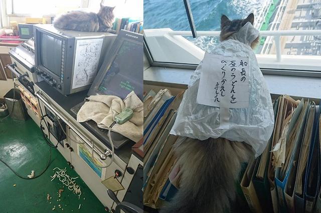 画像1: 船上で飼われている猫が船長のうどんをこぼし、Twitterで話題になっています。 懲罰を受けるニャンコ この画像を投稿しているのは、カンパチ船長(@captainKanpachi)さん。 懲罰を受けるカンパチ pic.twitter.com/LsZDwsUnhl — カンパチ船長 (@captainKanpachi) 2016年10月1日 画像には、「船長の昼のうどんをひっくりかえしました」と書いた紙を貼ったレジ袋を付けられたカンパチちゃんの姿が...。 どうやら、船長さんのお昼ごはんの「うどん」をひっくり返してしまった模様。 しかし、知らないふりをしてしまったカンパチちゃん。そのため、船長さんから懲罰を受けてしまったよう [...] irorio.jp