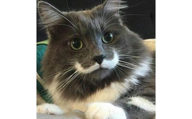 画像: 何をしててもサマになる♡ジェントルマンなヒゲ猫がインスタグラムで大人気