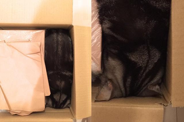 画像1: 荷物と箱の隙間にすっぽりと収まってしまったニャンコの姿が可愛すぎると、Twitterで話題になっています。 隙間にすっぽりなニャンコ この画像を投稿しているのは、ざわこ 10/9東4え29ab(@zawakoz)さん。 荷物の隙間が気になったので緩衝材代わりになるものを家中探していたんですが、いいサイズのプチプチ見つけて現場戻ったら指一本入る隙間がなかった pic.twitter.com/mLEvrXix0f — ざわこ 109東4え29ab (@zawakoz) 2016年10月5日 画像には、荷物と箱の隙間にすっぽりと収まってしまったこまちちゃんの姿が写っています。 ある日、荷物の発送の準備をしていたところ、荷物と箱の間に隙間が [...] irorio.jp