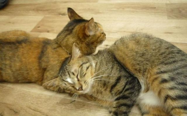 画像: 職場にネコがいたら...♡ネコ好きの夢を叶える「オフィス体験会@猫カフェ」が気になる