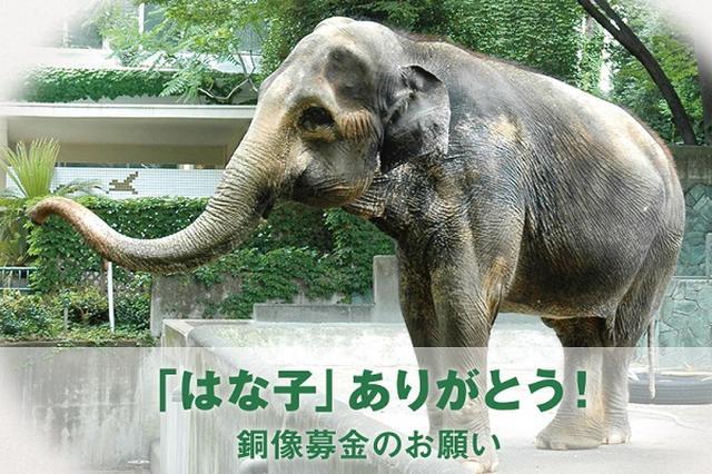 画像1: 吉祥寺駅前に「はな子」の銅像が設置される。 北口駅前広場に設置へ 東京都武蔵野市が、今年5月に死亡した井の頭自然文化園のゾウ「はな子」の銅像を制作し、吉祥寺駅の北口駅前広に設置すると発表した。 はな子の銅像は2017年(平成29年)5月に完成する予定だという。 60年以上、井の頭自然文化園に はな子は1947年にタイで誕生。1949年に来日し、1954年に井の頭自然文化園へ。以来、60年以上にわたって親しまれ続け、2013年には国内最高齢記録を更新。 今年5月26日に69歳の生涯を閉じた。 はな子を振り返る特設展が開催中 長年にわたって愛されてきた「はな子」の死を多くの人々が悼み、献花台にはしばらく花やリンゴが絶えることはなかったと [...] irorio.jp