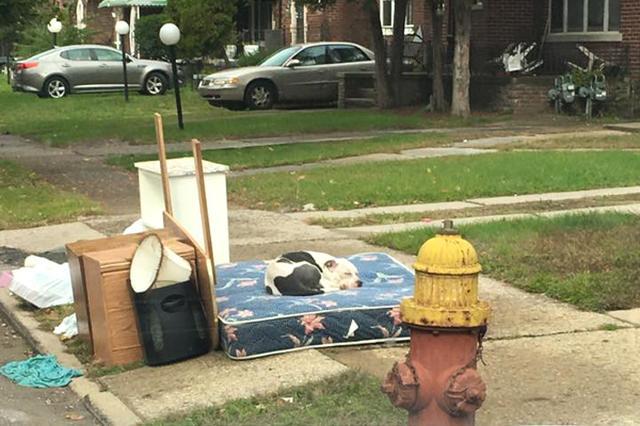 画像1: 引っ越しの際、不要になった荷物と一緒に置き去りにされた1匹の犬が話題になっています。 米・デトロイトのDetroit Youth & Dog Rescueは青少年教育施設および動物の保護施設。 ここに勤務するマイク・ディーゼルさんのもとに、ある日1本の電話がかかってきました。 飼い主に捨てられた犬 電話の主は、先日引っ越しをした隣人が飼っていた犬を荷物と一緒に置き去りにしたと、ディーゼルさんに助けを求めました。 そこで現場に駆けつけると、縁石に捨てられた荷物のそばに1匹のピットブルを発見。 犬は警戒しているのか、ディーゼル氏に近寄ろうとはしません。 詳しく話を聞くと、隣人が家を出たのは1ヵ月も前のことで、彼らは時折荷物を取り [...] irorio.jp