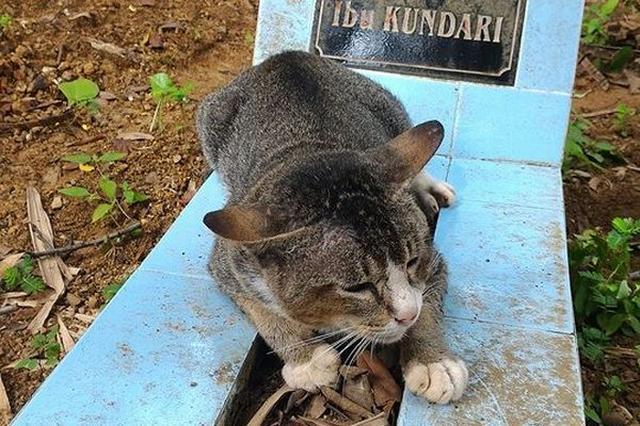 画像1: 亡くなった飼い主のお墓から離れず、その場に住み続けている猫がインドネシアで話題となっている。 毎晩、お墓のそばで眠る猫 そんな猫を見つけたのはKeli Keningau Prayitnoさん。彼は中部ジャワ州にあるお墓の近くを通りかかった時、墓石に横たわり鳴いている猫の声を聞きつけたという。 Keliさんはその猫が捨てられたと思い、家に連れ帰って世話をしたが、気がつけば再びお墓へと戻っていたそうだ。 それから彼は毎日、猫がお墓のそばにいるのを目撃。毎晩、その場で眠っていることも明らかとなる。 数時間だけお墓を離れることも 猫を観察していると、数時間だけお墓を離れることが発覚。 Keliさんが追跡すると、猫はある家に入り、住人から食事 [...] irorio.jp