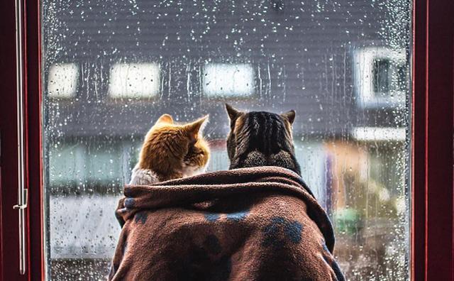 画像: 「今日はお外で遊べないにゃ...」雨の日のおこもりニャンコが可愛すぎ!