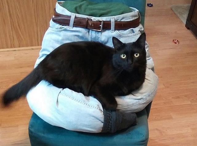 画像1: 愛するペットが心地よく過ごせる環境を作ってあげたい...。 ペットを飼う人たちのそんな気持ちを体現した動画が話題になっています。 家庭のもので手軽に手作り 自ら「猫様の召使い」と称するクリス・ポールさんの猫愛は熱烈。 ウェブサイト、インスタグラム、フェイスブック、YouTubeなど様々なメディアで愛猫との生活や猫への思いを発信し、常に猫のことを考えているようです。 Cole and Marmaladeさん(@coleandmarmalade)が投稿した写真 – 2016 11月 9 5:31午前 PST 「猫に支配される幸せ」 ポールさんは、相棒のコールとマーメードが快適に暮らせるためのアイディアをYouTubeで紹介してい [...] irorio.jp