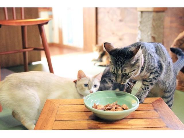 """画像: 保護猫をもっと知って""""猫助け""""を共有!猫グッズも販売"""