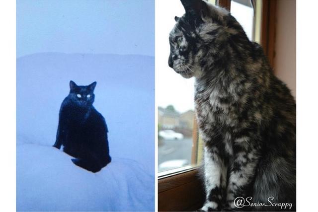 画像1: 黒猫として生まれてきたとは思えないニャンコが、フェイスブックで8万9000もの「いいね!」を受けて話題になっている。 それがこちらのScrappyだ。 黒い毛と白い毛が入り混じり、まるでゴージャスな毛皮をまとったネコのようだが、Scrappyは7歳まで真っ黒な黒猫だったという。 ▼尻尾に黒猫時代の面影が ▼お腹もこんな感じ 飼い主のデヴィッドさんによると、人間と同じく白斑が原因だと考えているそうだ。ネコには珍しいという。 ▼5歳の時のScrappyと17歳の時のScrappy ただし、Scrappyは健康状態に一切問題がなく、とっても元気いっぱいだという。 ▼同居ネコとも仲良し ▼箱は独り占め ▼同居ワンコは見張り仲間 ▼引き出しを [...] irorio.jp