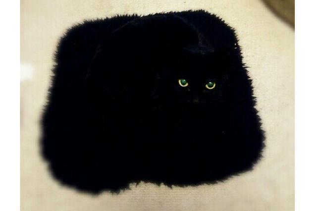 画像1: 座布団と同化しすぎてしまった黒猫が可愛すぎると、Twitterで話題になっています。 座布団と同化しちゃうニャンコ この画像を投稿しているのは、羊毛フェルト作家のペコ(@peco_4696)さん。 こいつ座蒲団と一体化したで!#黒猫 pic.twitter.com/eumx9RbL3C — ペコ (@peco_4696) 2016年12月12日 画像には、座布団と同化してしまった黒猫のヒジキちゃん(12歳)の姿が写っています。 黒い座布団に、黒猫の顔を加工した写真かと思いきや...。 なんと、コラ画像ではなく、実際にペコさんが撮影した写真なんだとか。 同系色の座布団に見事に溶け込んでしまったヒジキちゃん。 「何か問題でも?」というような [...] irorio.jp