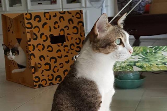 画像1: のんびりとベッドでくつろぐ猫ちゃんは、タイで暮らしているエイブル。実は、2本の足としっぽを失っています。 able_maewさん(@able_maew)が投稿した写真 – 2016 11月 24 2:55午前 PST エイブルは4年前まで野良猫でした。ある日、街中で鳥を追いかけていたところ変圧器に触れて感電し、前足としっぽの部分を切断するほどの大ケガを負ってしまったのです。 瀕死の状態のエイブルを引き取って動物病院に連れていったのが、現在の飼い主さんでした。 ฝันดีนะครัช #goodnightmeow able_maewさん(@able_maew)が投稿した写真 – 2016 11月 19 7:52 [...] irorio.jp
