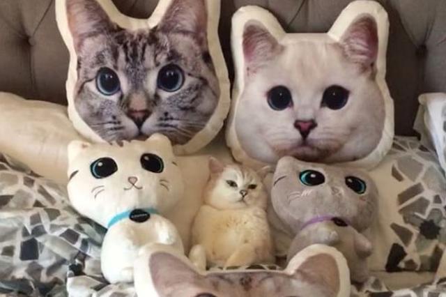 画像1: 素知らぬ顔で猫グッズに紛れるキュートな白猫。 彼の名前はミスター・ホワイト。インスタグラムで130万人のフォロワーを持つブリティッシュショートヘアです。 130万といえば長澤まさみさんや小嶋陽菜さんと同クラス。 ミスター・ホワイトはそれほど多くの人たちから愛されている、超ド級のアイドル猫なんです。 White_coffee_catさん(@white_coffee_cat_)が投稿した写真 – 2016 12月 20 9:14午前 PST モフモフしたい 彼のチャームポイントは大きなお目目と真っ白な毛。 White_coffee_catさん(@white_coffee_cat_)が投稿した写真 – 2016 1 [...] irorio.jp