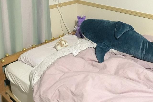 画像1: 飼い主のベッドで人みたいに寝ているニャンコの姿が可愛すぎると、Twitterで話題になっています。 お風呂から戻ってみると... この画像を投稿しているのは、ホイップ(@HOIPPU_0722)さん。 なにこれすごい、普通に寝てる pic.twitter.com/3rrIpRsChy — ホイップ (@HOIPPU_0722) 2017年1月10日 画像には、ベッドの中で普通に寝ているホイップちゃんの姿が...。 きちんと布団から顔を出し、人のように寝ています。 飼い主のホイップさんが、布団を掛けてあげたのかと思いきや...。 「私がお風呂に入って戻ったら、ホイップがああなっていたので、自分で入ったのだと思われます」と話すホイップさん。 自らベ [...] irorio.jp
