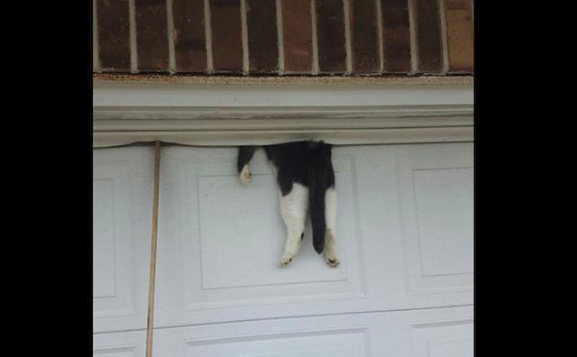 画像1: 今月7日、米国ルイジアナ州の保安官事務所は、民家のガレージの扉上部に挟まるという奇妙な状態で動けなくなっていた猫を、無事救出したことを発表した。 扉上部の隙間に 保安官事務所がfacebookに公開した写真を見ると、確かに猫が挟まっている。このガレージの扉はシャッターでなく、両開き扉で、上部には隙間がある。そこからの雨風の進入を防ぐために付けられた覆いの中に、猫は頭を突っ込んでいるように見える。 駆けつけた保安官も驚き 連絡を受けて現場に駆けつけた保安官マイク・スコットさんは、職歴36年のベテラン。だが、「こんな状況を見たのは初めて」と言う。 スコット保安官が到着した時、家の主は不在で、近隣住民がガレージの前に集まっていた。猫はベラ [...] irorio.jp