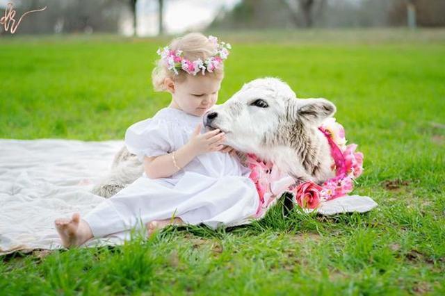"""画像1: 小さな女の子と子牛の間に芽生えた、心温まる絆についてお伝えしたい。 米テネシー州メンフィスに住むグレー家は、お父さんとお母さん、2歳になる愛娘のキンリーちゃん、それから赤ちゃん牛のモリーの4人で暮らしている。 子牛も家族の一員 最初にお断りしておくが、牛のモリーは家畜ではなく、娘キンリーちゃんの姉妹、または親友として、生活を共にしているのだ。 母レイシーさんも、「まさか娘に""""子牛""""の友達ができるとは思ってもみなかった」と、The Dodoの取材に対し述べている。 こうなった経緯をご説明しよう。 生後すぐに母を亡くしたモリー カメラマンをしているレイシーさんは、仕事で牛の写真を撮ることになり、牧場を営む親戚に連絡すると、子どもを産んだ [...] irorio.jp"""