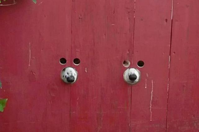 画像1: 相手を笑かしてやろうという意図で、自らボケる動物はいない。 動物が何の気なしに、無邪気にやるからこそ笑えるのである。 笑い誘う2匹のワンコ この2匹のワンコも例外ではない。 赤い木製の門の下辺りで、2匹の犬がそれぞれ穴から目と鼻をのぞかせ、こちらをじぃ~っとうかがっている。 よほど好奇心が旺盛なのか、それとも観察好きなのか、2匹の愛犬のために開けられた専用の穴なのだろう。 その証拠に、穴の位置はそれぞれの目と鼻にピッタリの場所に開いている。 これはredditに投稿された写真で、「可愛い」「癒しの光景だ」「寸分の狂いなく開けられている...」「どうせなら窓を作ってあげればいいのに」「これなら絶対逃げられないしね」「噛むことも吠えることも [...] irorio.jp
