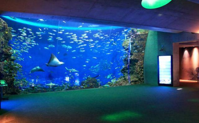 画像: お魚に囲まれて過ごす夜☆鴨川シーワールド「夜の女子会プラン」が楽しそう♪