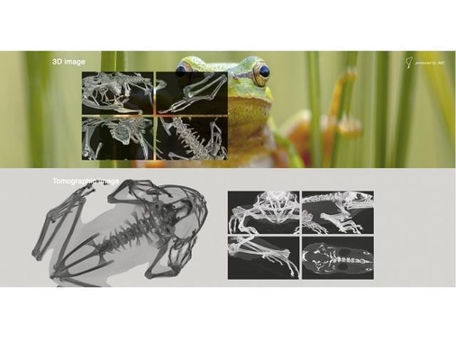 画像: 身近な生物が丸裸に!?新サイト「CT生物図鑑」開設