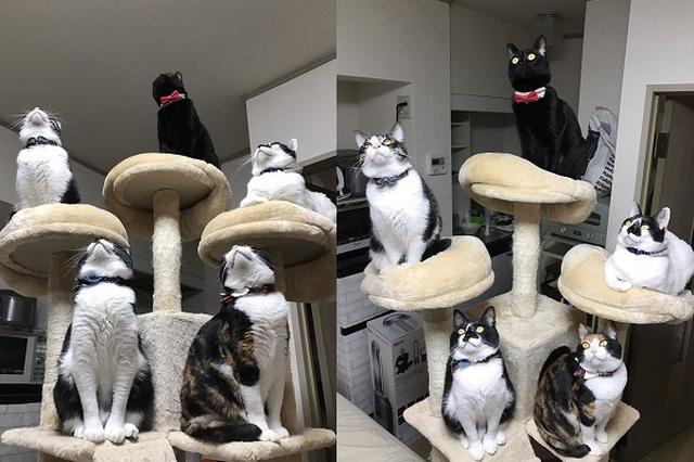 画像1: 自宅に初めて出現したゴキブリを見つめるニャンコたちの姿が神々しいと、Twitterで話題になっています。 ゴキブリに告ぐ...覚悟しな... この画像を投稿しているのは、響介(@HOMEALONe_ksk)さん。 ゴキブリどもに告ぐ... 我が家に出たゴキブリはこの五猫神に24時間絶命するまで見つめられるのだ... 覚悟しな... https://t.co/YDkCsEpia6 pic.twitter.com/1q2X3bMu0Y — 響介 (@HOMEALONe_ksk) 2017年2月20日 画像には、キャットタワーにのりながら、天井を見つめるニャンコたちの姿が写っています。 実は、自宅に初めて小さいゴキブリが出現し、その様子をじっと見 [...] irorio.jp