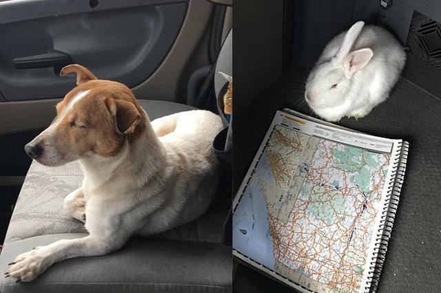 """画像1: 米フロリダ州のハイウェイで、道路のすぐ脇に捨てられている、やせ細ったジャックラッセルテリアに気づいた、トラックドライバーのダンさん。彼は予定になかった出口で高速を降り、急いでその犬の救助に向かったという。 その犬のその後の行動が、多くの人の感動を呼んでいる。 「ついてきて」というように歩き出した犬 そのジャックラッセルテリアは、近づいてきたダンさんに気づくと、高い声で吠えては逃げ出し、また近づくと逃げるのを繰り返していたという。 どうしてそんな行動をとったのか。その答えは、その犬が導いたヤブの中にあった。 やせ細り、うずくまっていた""""友人"""" その犬が導いた先にいたのは、やせ細った家うさぎ。ダンさんがそのうさぎを救い上げると、満足した [...] irorio.jp"""