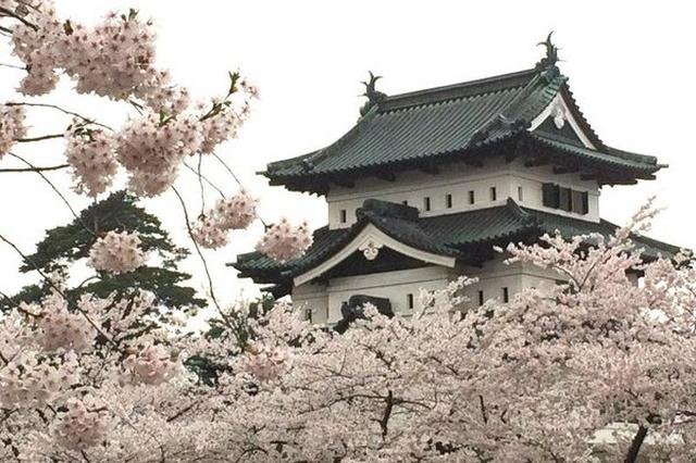 画像1: 20年以上、全国各地の「桜前線」を追い続けている人がいます。 「桜」を追い続けて... 1995年から「桜前線」を追い続けている「桜キャスター」の中西一登(@hanaoibito)さん。 柏市 北柏ふるさと公園の河津 #桜 見頃。蜜をよく出すので、このヒヨドリや、メジロがよく集まります。 #sakura pic.twitter.com/QQySJF7f5s — 花追人 (@hanaoibito) 2017年3月1日 桜の花が好きすぎて、なんと会社を辞めてしまったこともあったんだとか。 その時は、九州から北海道までを横断し、「桜前線」を追いかけたそうです。 桜の花は「春限定」だと思われていますが、実は年中、各地で咲いているとのこと。 静岡 [...] irorio.jp