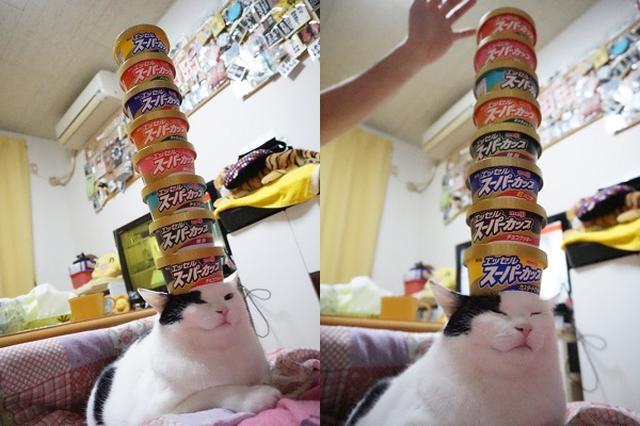 画像1: 頭に「スーパーカップの容器」をのせるニャンコの姿がスゴいと、Twitterで話題になっています。 「スーパーカップの容器」8個のせ! この画像を投稿しているのは、ミスター福助(@mrfukusuke)さん。 久々のスーパーカップチャレンジ! pic.twitter.com/m5GdNttyk5 — ミスター福助 (@mrfukusuke) 2017年3月25日 画像には、頭に「スーパーカップの容器」をのせるミスターちゃん(女の子)の姿が...。 頭の上に8個の容器が、高々と積み上げられています。 しかし、全く動じることもなく、どっしり構えるミスターちゃん。 頭に「スーパーカップの容器」がのっていても、とくに気にしていないご様子。 もちろ [...] irorio.jp