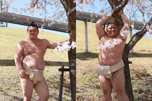 画像1: 桜前線が日々北上している今日この頃、角界の人気者たちも春を満喫しているようだ。 満開の桜の木の下でポーズをとる力士たちが話題になっている。 「なんかセクシー」 日本相撲協会が公式Twitterに掲載したこちらの写真。 <春巡業@常陸大宮場所>桜の下でポーズをとる、勢・御嶽海。 #sumo pic.twitter.com/S9f5WRkaRF — 日本相撲協会公式 (@sumokyokai) 2017年4月18日 桜の下でグラビアばりのポーズをとる御嶽海、勢の姿に「かわいい」「なんかセクシー」といった声が多数寄せられている。 なんで御嶽海は全力でセクシーなんだよ笑わせんな — このは (@masashimanekko) 2017年4月 [...] irorio.jp