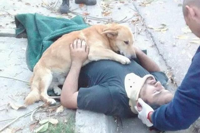 画像1: 義理堅すぎる!木から落ちた主人に寄り添い続ける犬にジンとくる 忠犬ハチ公も顔負けの、ご主人思いのワンコが人々の心をつかんで離さずにいる。 アルゼンチン・ブエノスアイレス州のペルガミーノという街で暮らす「Tony」である。 飼い主が木から落下 The Dodoが伝えるところによると、14日土曜日、Tonyの飼い主であるJesus Huecheさんは、自宅の前にある木の剪定作業をしていた際、誤って6フィート(約2メートル)下のコンクリートの歩道に落ちてしまったという。 頭を強く打ちJesusさんは意識を失ったが、幸い、愛犬Tonyのおかげで1人取り残されるようなことはなかった。 飼い主に寄り添い続ける愛犬 心配したTonyはずっとJes [...] irorio.jp