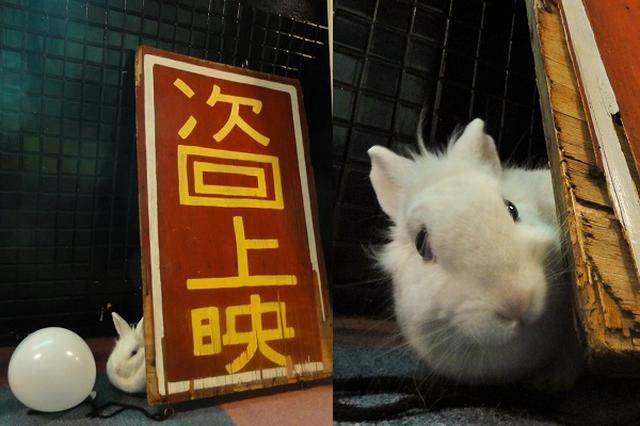 画像1: 秋田県の映画館の中で、自由にうさぎが動き回る様子を公開しているTwitterアカウントがあります。 映画館に住むうさぎ 秋田県大館市にある映画館「御成座(オナリ座)」(@OdateOnariza)では、うさぎが放し飼いになっています。 御成座は、1952(昭和27)年に洋画専門のロードショー館として開館しました。 2005年の閉館まで市民に親しまれてきましたが、数年ほどは活用されることがなかったそうです。 「うさぎさま、ご注文はお決まりですか?」 「そうだな...たんぽぽとコーラのMセット...あ、やっぱLセットで」 「では400円になります。お支払いはどうなさいますか?」 「カード使えたっけ?」 「使えません」 「じゃあ、つけといてくれる [...] irorio.jp