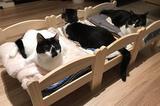 画像1: IKEAのベッドでくつろぐニャンコたちの姿に注目が集まっています。 合宿してるみたいなニャンコたち この画像を投稿しているのは、響介(@HOMEALONe_ksk)さん。 IKEAのベッドたくさん買ったらなにかしらの合宿感がすごい https://t.co/imBp9iWfGw pic.twitter.com/1pS7P71jt5 — 響介 (@HOMEALONe_ksk) 2017年6月2日 ある日、響介さんはニャンコ用にIKEAのベッドを購入してみたそうです。 ニャンコたちがベッドを使ってくれるのか、少し不安でしたが...。 警戒することもなく、ニャンコたちはIKEAのベッドでくつろいでくれたんだとか。 3つ並んだIKEAのベッドにい [...] irorio.jp