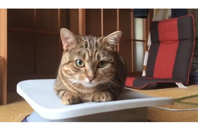 画像1: エクササイズ用の器具の上に乗っているニャンコが可愛すぎると、Twitterで話題になっています。 ニャンコ自らダイエット!? この動画を投稿しているのは、ちぃ(@kirichan33)さん。 飼い主は三日坊主になってるのにちぃちゃんは毎日続けてる pic.twitter.com/5izfVegqIS — ちぃ (@kirichan33) 2017年6月26日 動画には、エクササイズ用の器具に乗ってバランスを取るちぃちゃんの姿が映っています。 とくに怖がる様子もなく、そのまま器具の上に座ってしまったちぃちゃん。 どうやら、器具の適度な揺れや振動が気に入った模様。 なんと、ちぃちゃんは毎日、この器具の上に乗ってエクササイズをしているそう [...] irorio.jp