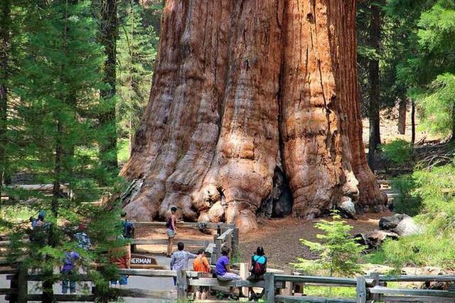 画像1: まるでペットの様に、いや、家族の様に木や草花を愛し、大切に育てている人がいる。 「アーボリスト」と称する、樹木の栽培や手入れ方法に詳しく、その治療も手がける専門家であれば、木々への思いはひとしおだろう。 樹木の専門家によるリベンジ 米カリフォルニア州レドンドビーチに住む男性も例外ではない。 自称アーボリストの男性は、海外の掲示板であるImgurに、「死と新しい命、リベンジの話をしたい」と、ある告白をしている。 結論から言うと、彼は市に対し、樹木に関する豊かな知識と技術を武器に、街のあちこちに巨木を植えまくるという復讐に打って出たのだ。 市の命令で自宅の木を伐採 時をさかのぼること3年前のこの日、男性は市議会の決定により、30年にわた [...] irorio.jp
