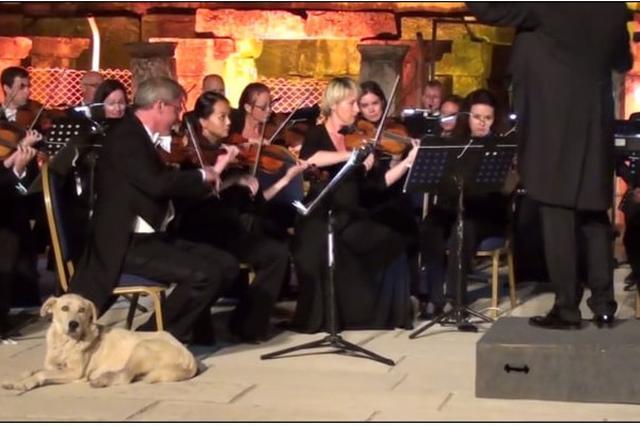 画像1: オーケストラの演奏中、舞台に一匹の犬が上がってくるというまさかの事態が発生しました。 この出来事を「クラシック音楽のとてもキュートな瞬間」としてツイッターに投稿したのはファジル・サイさん。世界的に活躍するピアニストで、日本にも複数回来日しています。 「とてもキュートな瞬間」 現場はトルコのチェシメで開催された、第31回国際イズミール・フェスティバルにて、ウィーン室内管弦楽団による演奏中でした。 Cutest moment in classical music. Vienna Chamber Orchestra – Ola Rudner, Conductor – Fazıl Say, Piano – [...] irorio.jp