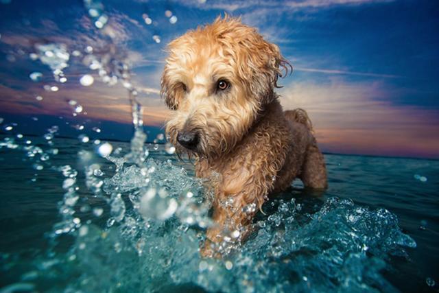 """画像1: イギリスの動物福祉団体・ケンネルハウスが主催するフォトコンテスト""""Dog Photographer of the year2017""""の入賞作が発表されました。 コンテストは11の部門に分かれ、それぞれの内容に合った写真を提出します。 入賞作はどれもが、日頃なかなか見かけないような姿、躍動感にあふれています。 飼い主が日頃の様子を撮影したものとは異なり、犬としての本能があふれ出るものや、親しみのこもった顔つきをするものなど、胸を打つ1枚ばかりです。 各部門の入賞作品 「人間のベストフレンド」部門の優勝者、Maria Davisonさんが撮影した一枚。 タイトルは""""A Girl's Best Friend""""です。 David [...] irorio.jp"""