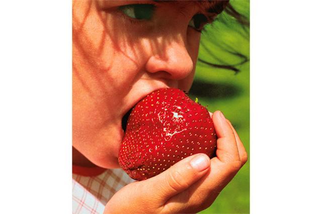 画像1: 最近イギリスでは、巨大なイチゴの新品種が出回りはじめているそうだ。 種苗会社が10年かけて開発 Gigantella Maximというその新品種は、テニスボールほどの大きさにまで育つ。 巨大イチゴといえば、2015年にギネスレコードに認定された日本の「あまおう」があるが、こちらは突然変異で出現したしたもので、いびつな形をしている。 Gigantella Maximはそれとは違い、異化受粉を10年以上くり返して1つの品種として固定されたもの。(遺伝子組み換えではない)形は普通のイチゴと変わらない。 開発したのはイギリスのBakkerという種苗会社。同社の社長であるAdrian Nind氏は「このイチゴは本当に大きいです。1個持つだけで [...] irorio.jp