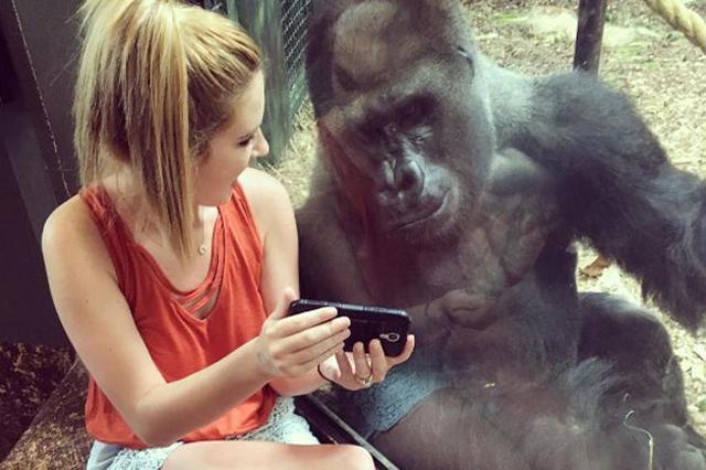 画像1: アメリカの動物園で、何とも微笑ましいシーンが目撃されたのでご紹介しよう。 一緒にスマートフォンで動画を見ている女性とゴリラの姿である。 ゴミ箱へ移動 Lindsey Costelloさん(@lindseyncostello)がシェアした投稿 – 2017 6月 29 7:51午後 PDT 投稿にはこう綴られている。 新しくできた友達と、赤ちゃんゴリラの動画を鑑賞中。 ここは、ケンタッキー州にあるルイビル動物園のゴリラの檻の前で、女性はスマホをゴリラの方にかざし、ゴリラも興味津々な様子で画面をのぞき込んでいる。 女性はリンジー・コステロさん。 この日、同園を訪ねたリンジーさんはこの場所で、先に1人のおばあさんがゴリラにビデ [...] irorio.jp