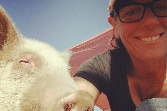 画像1: カリフォルニア州テメキュラにある動物保護施設「セール・ロンチ・サンクチュアリ」に1匹の子豚がやってきました。 「チェリーブロッサム」と名付けられていたメスの子豚は、重度の疥癬(かいせん)という皮膚病にかかっていました。 施設長のジェン・セールさんによると、この子豚を連れてきた人は「迷子の子豚だった」と言っていましたが、迷子ではなく「(手に負えなくて)連れてきたのでは」と考えていたそうです。 寄付を募り、治療を開始 疥癬はダニが原因で起こり、激しいかゆみに襲われる病気です。免疫力が低いとさらにダニが増殖して、皮膚が固まってしまいます。 チェリーのようにまだ免疫力の低い子豚はあっという間に重症化してしまったのでしょう。 皮膚は、目をほと [...] irorio.jp