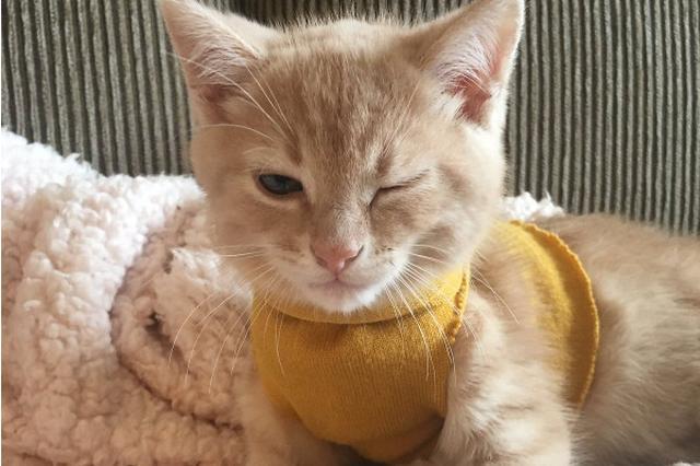 画像1: eden(@eden_bloor)さんが飼っている子猫のアルロちゃん。 edenさんの手作りのセーターを着せてみたらご機嫌で、写真を撮ってみたら偶然にもアルロちゃんがウインクしているような表情が撮れたのです。 I made my kitten a sweater so he wouldn't get chilly with the A/C on and now he thinks he's a stud pic.twitter.com/7hqT95IfGq — eden (@eden_bloor) 2017年6月25日 画像をTwitterに投稿したところ、海外の著名人やジャーナリストにも拡散し、なんと22万 [...] irorio.jp