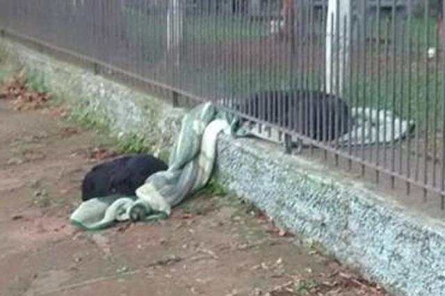 画像1: 2匹の黒い犬だろうか? 1枚の毛布の上に、フェンスを隔てて寝転んでいる写真が話題になっている。 互いに見知らぬ犬同士 「何でわざわざ柵越しに?」とか、「どうせなら一緒に寝ればいいのに...」なんていう疑問が湧いてくる。 しかし、2匹は同じ家の飼い犬ではない赤の他人(犬)。そもそも同じ寝床で寝ることができないのだ。 ではなぜ、1枚の毛布を分け合うような形で寝ているのか? 人間顔負けの思いやり そこには、人間顔負けの思いやりと友情に満ちたストーリーが隠れていた。 2匹が目撃されたのはブラジルのイヴォチという街。フェンスの内側で飼われているのは、この家の「ラナ」という子犬だ。 南半球のブラジルでは、今の季節は冬。 寒いので、飼い主は夜寝る前に [...] irorio.jp